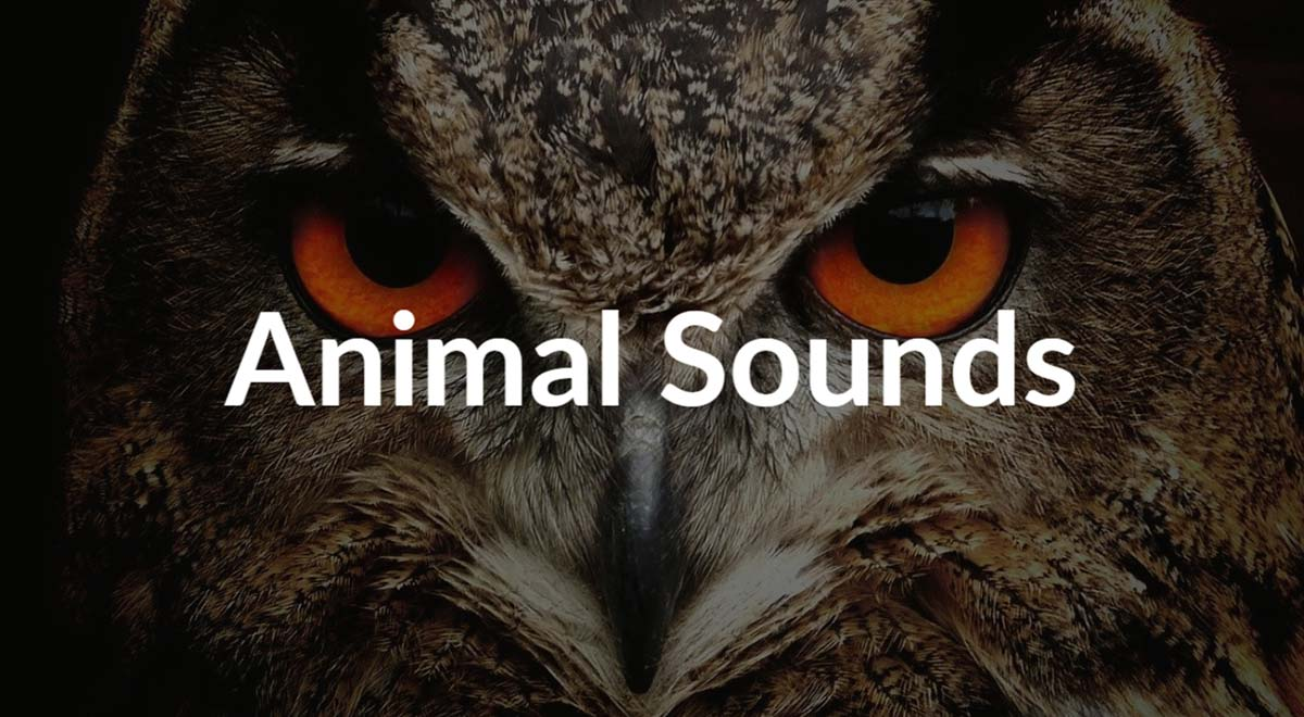 Royalty free animal sounds